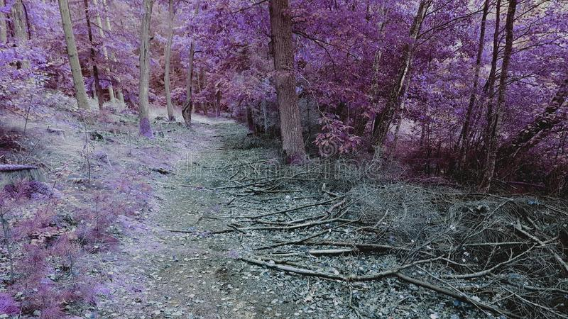 Purple forest. royalty free stock image