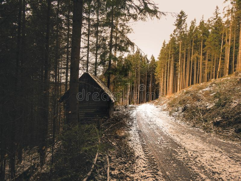 Forest in National park Sumava. National park Sumava is biggest park in Czech republic. Nature is wild and beautiful stock photography