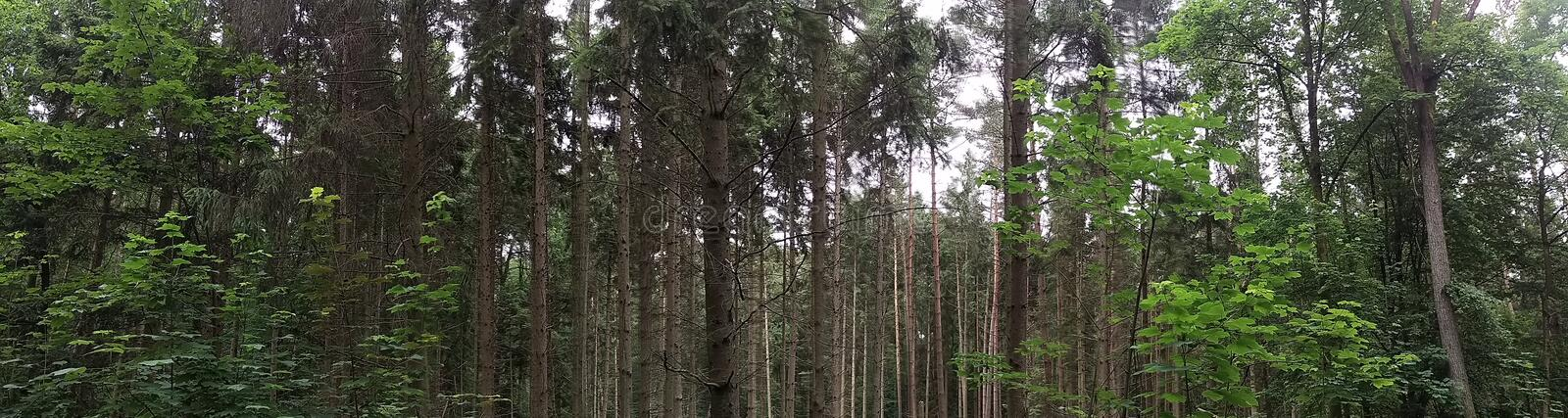 Wald stock photography