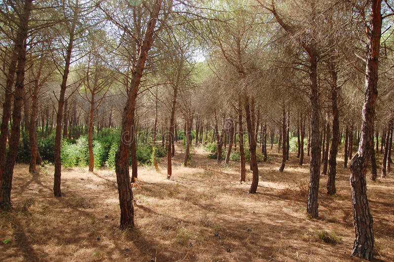 Forest in a nature reserve of WWF. Located in Sicily royalty free stock photo