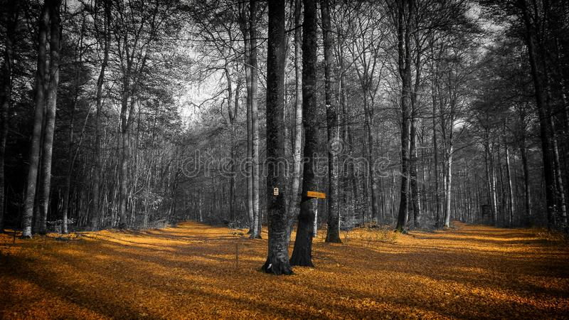 Forest, Nature, Woodland, Path stock photo