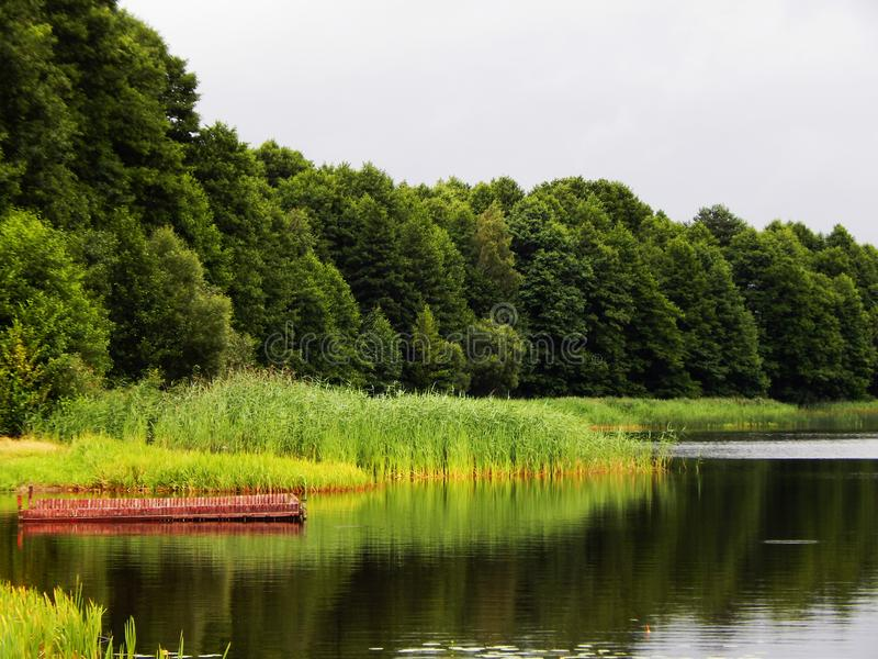 The forest near the lake stock photography