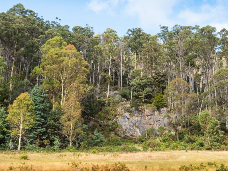 Forest Near Mole Creek imagen de archivo libre de regalías
