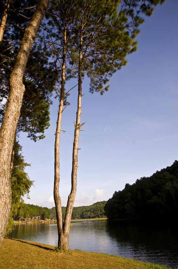 Download Forest near the river stock photo. Image of leaf, forest - 17606184
