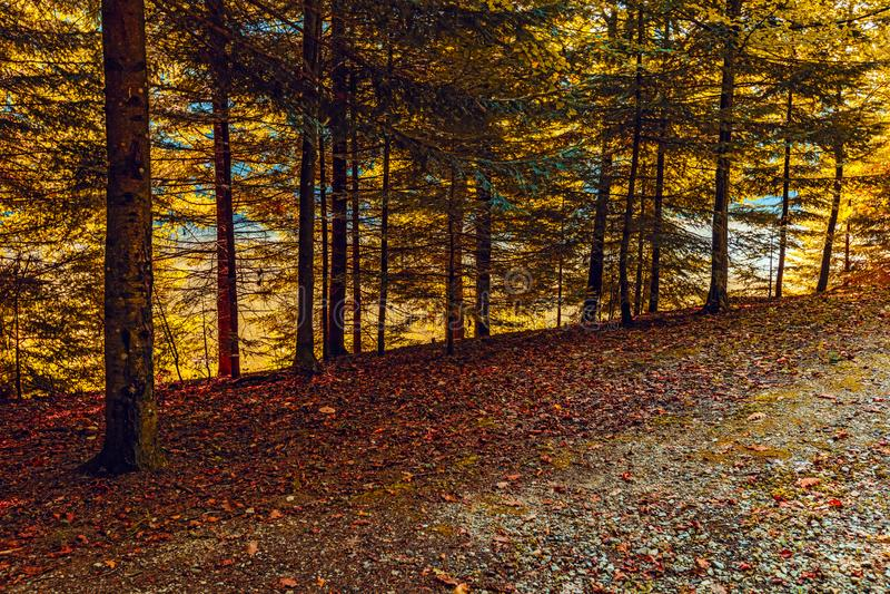 Forest near Trakoscan castle in Croatia. Autumn Forest near Trakoscan castle in Croatia stock photography