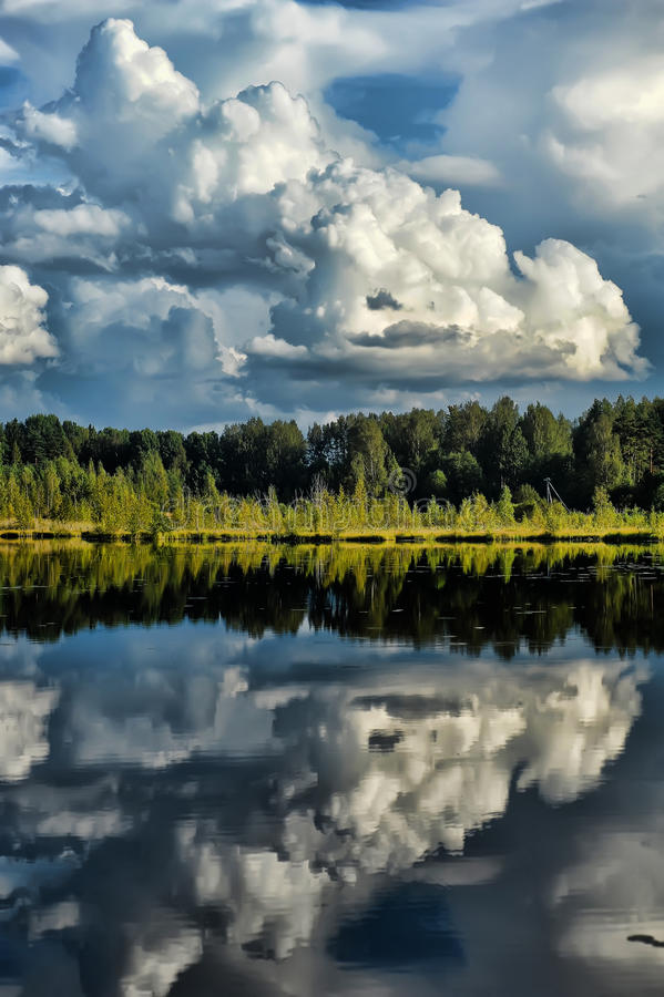 Forest near the water. And reflection royalty free stock photo