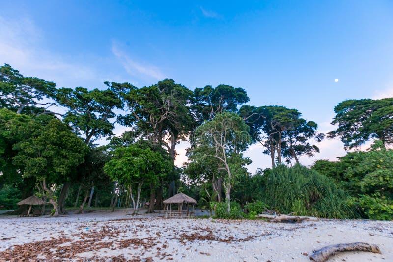 Forest Neil Island Andaman image stock