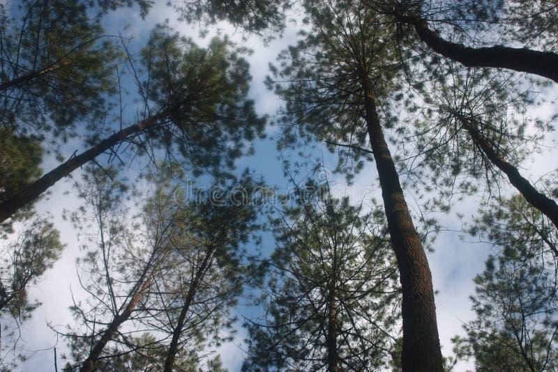 forest ngargoyoso stock photo