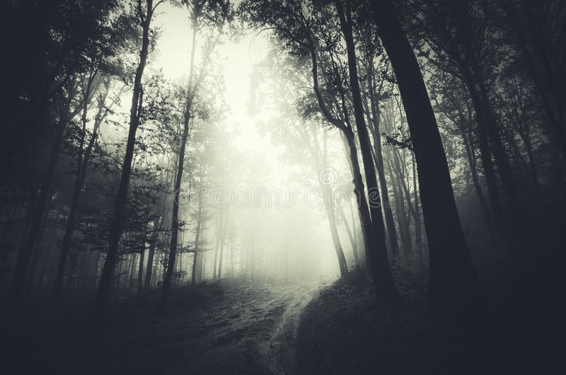 Forest at night with path stock photography