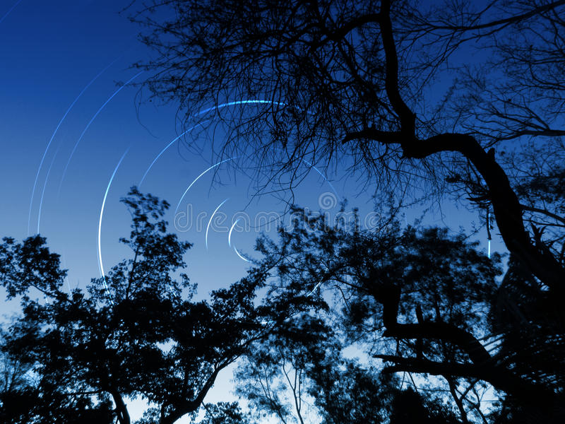Forest night sky star trails stock image