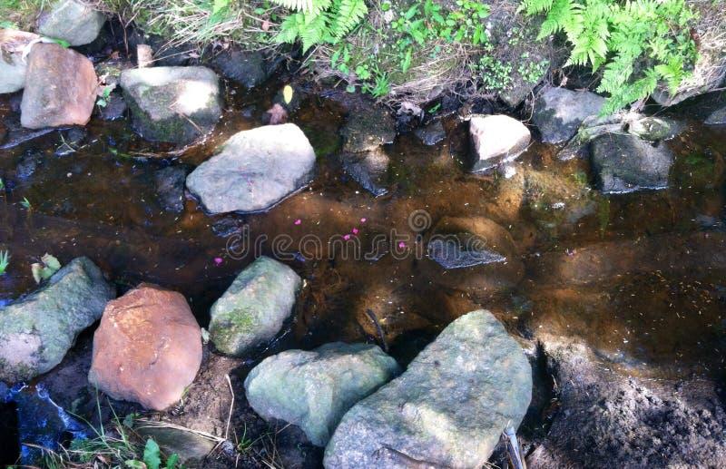 Forest Nirvana fotografia de stock royalty free