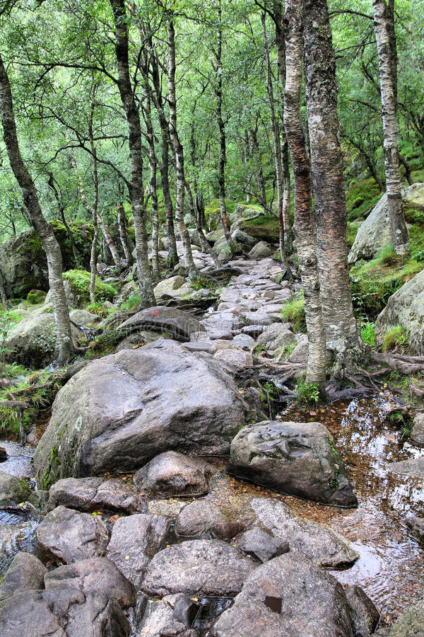 Download Forest in Norway stock image. Image of sightseeing, summertime - 23594697