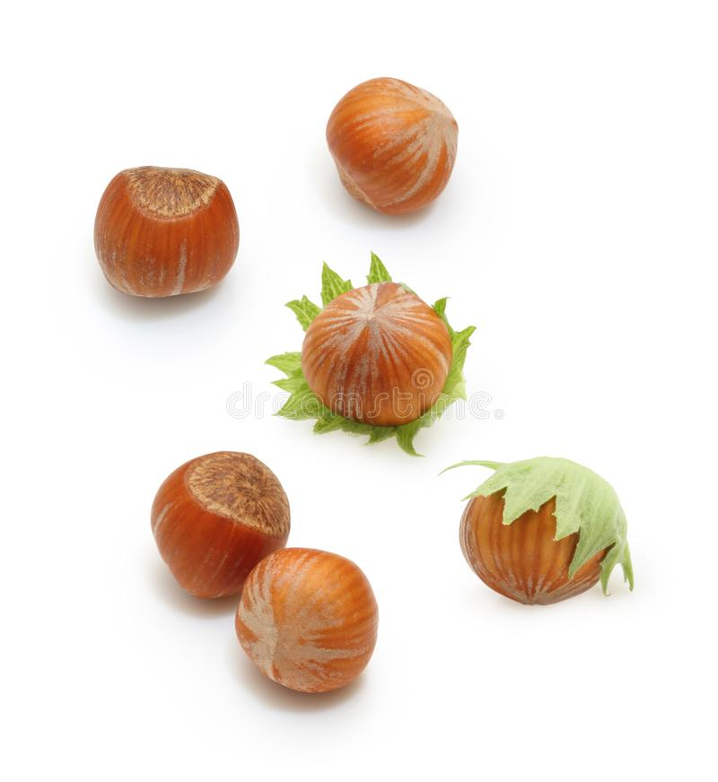 Forest nuts hazelnuts isolated royalty free stock photography