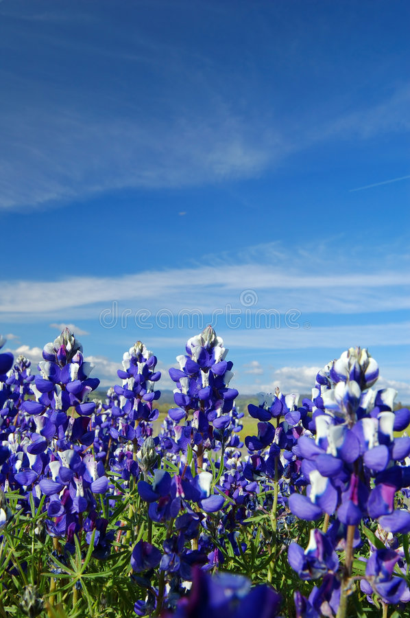 Free Forest Of Wildflwers Royalty Free Stock Images - 676129