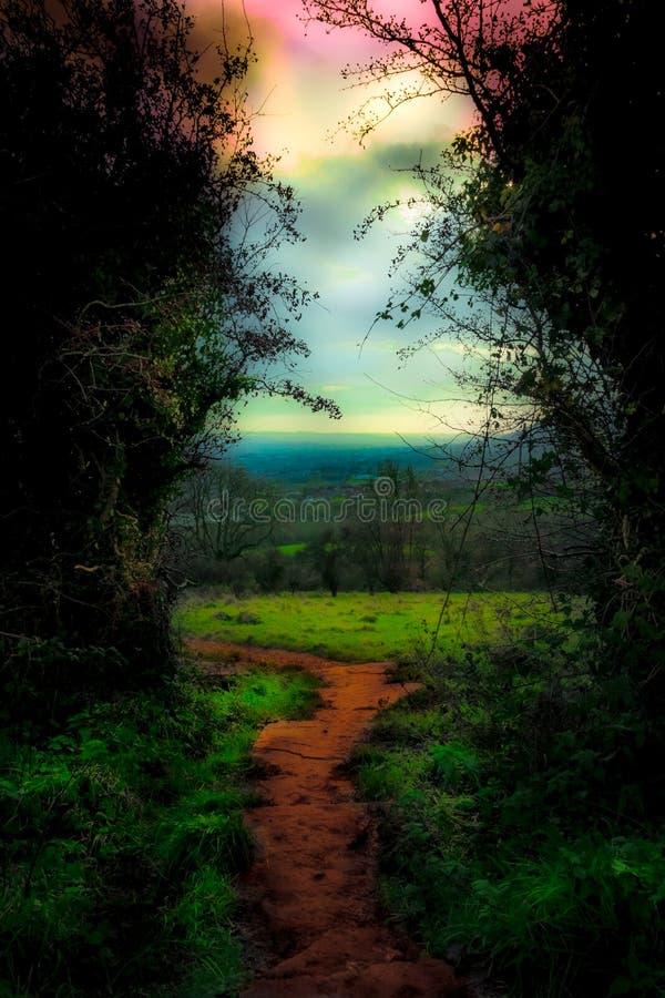 Forest Opening på grottakullen, Belfast, Irland royaltyfria bilder