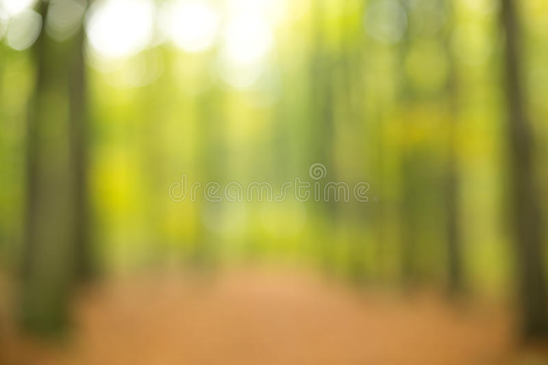 Forest out of focus royalty free stock photo