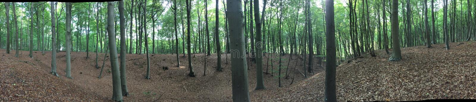 Forest overvieuw royalty free stock photography