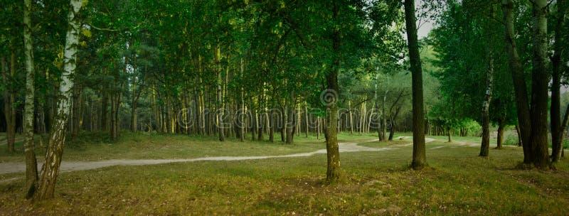 forest panorama 库存照片