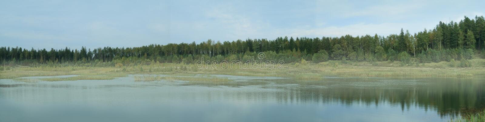 Forest panorama royalty free stock image