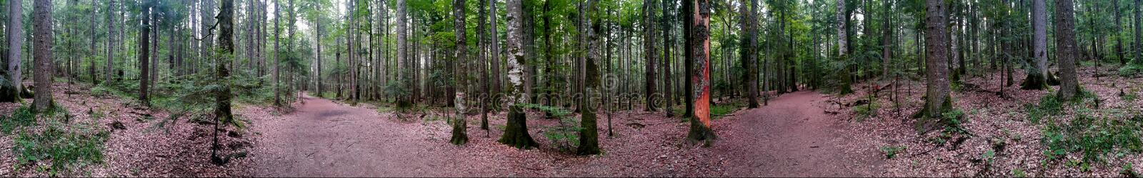 Forest Panorama stock afbeelding
