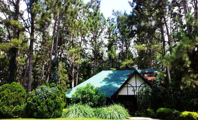 Forest Paradise photo libre de droits