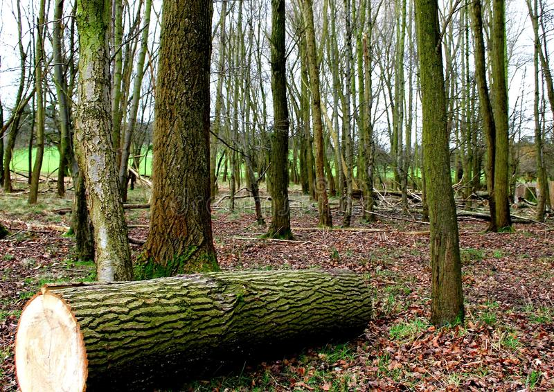 Forest Park lizenzfreies stockbild