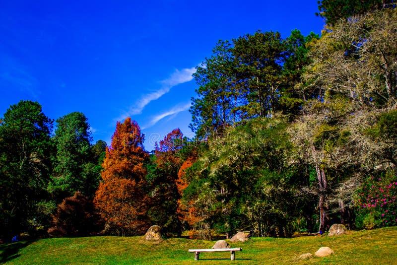 Forest Park fotografía de archivo
