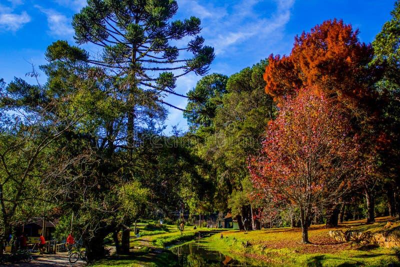 Forest Park foto de archivo