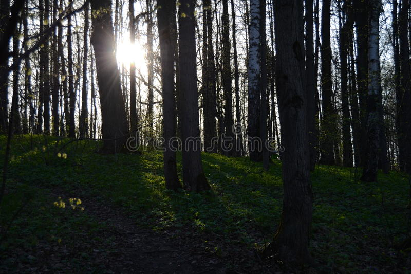 Forest Park imagen de archivo libre de regalías