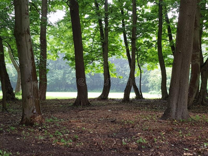 Forest Park photographie stock libre de droits