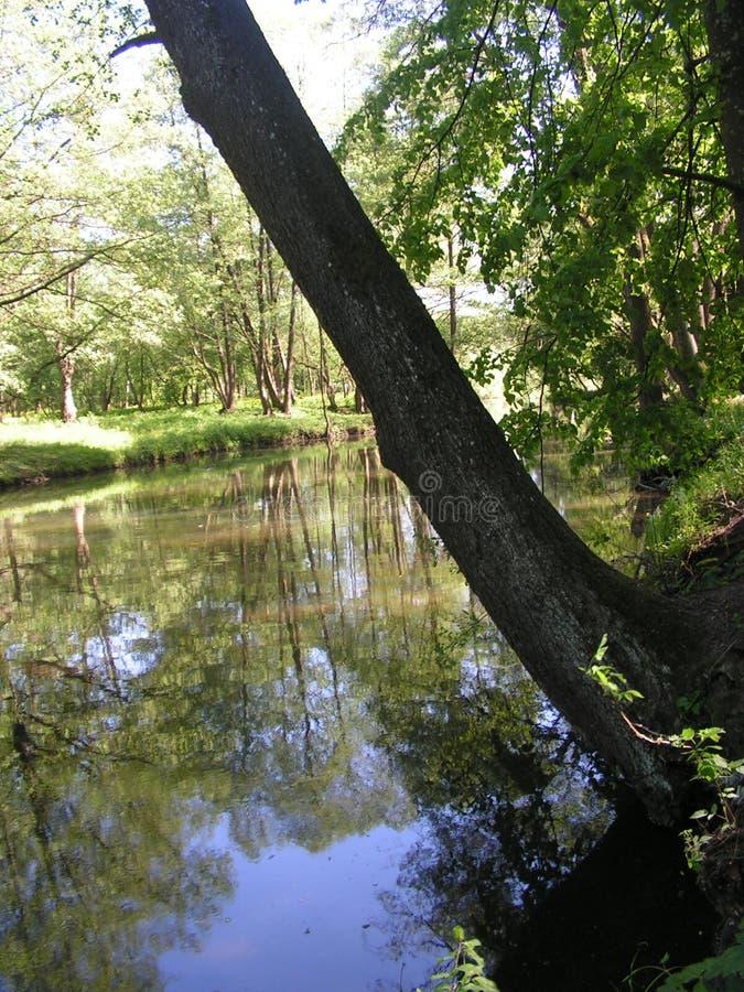 11 Forest Park ?DROZDY ?in Minsk Wei?russland stockfotografie