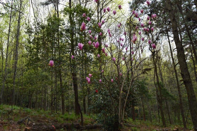 Forest Park en el ` anshan Wuhan del mA imágenes de archivo libres de regalías