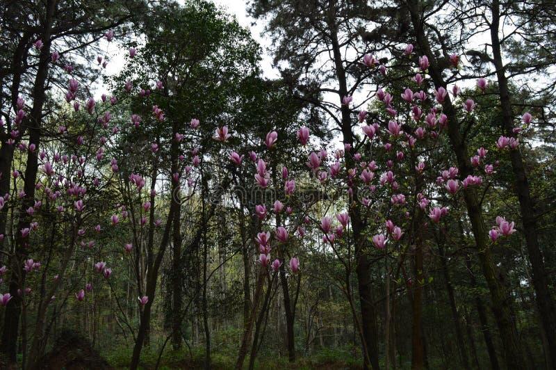 Forest Park en el ` anshan Wuhan del mA foto de archivo