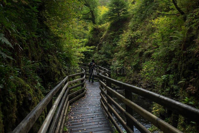 Forest Park Glenariff ιχνών καταρρακτών, Βόρεια Ιρλανδία στοκ εικόνα με δικαίωμα ελεύθερης χρήσης