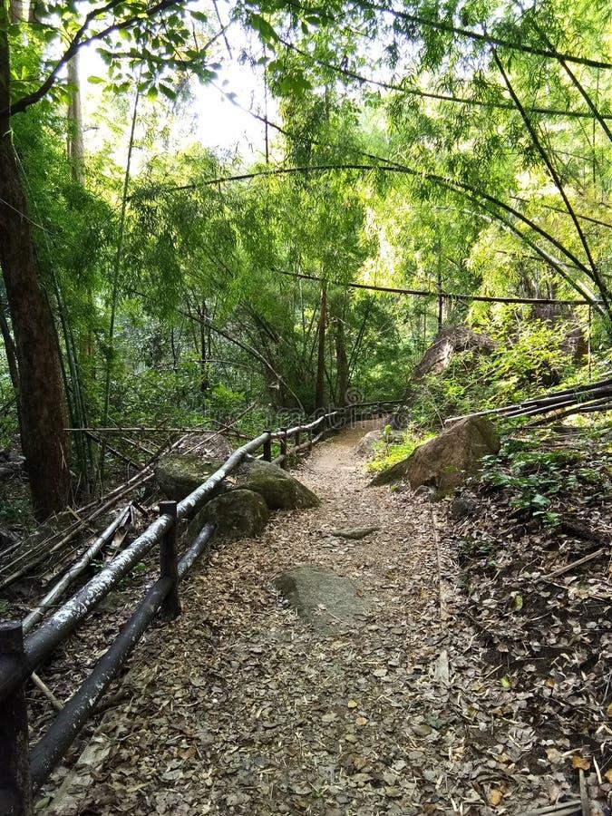 Forest Park ingång royaltyfri fotografi