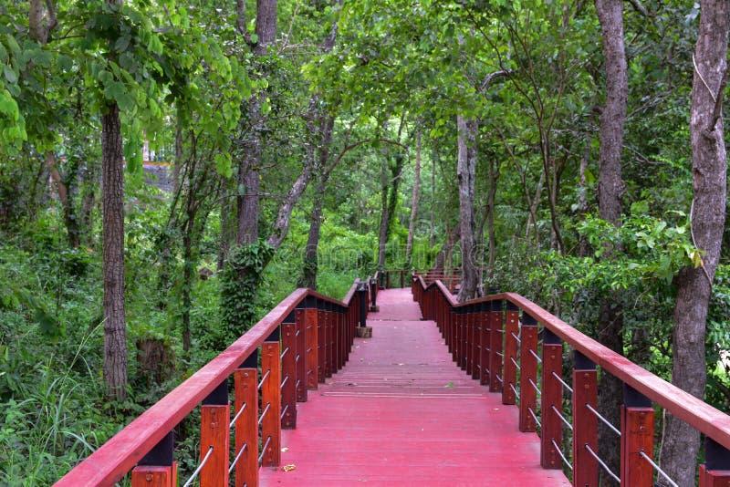 Forest Park Kradong Khao, κριός Buri, Ταϊλάνδη στοκ φωτογραφία με δικαίωμα ελεύθερης χρήσης