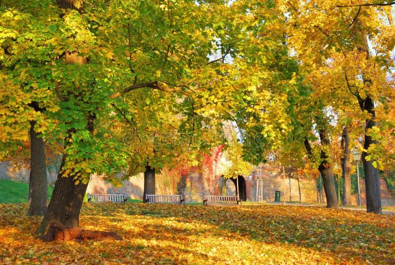 Forest Park mit mehrfarbigen Baumblättern im Herbst stockfotografie