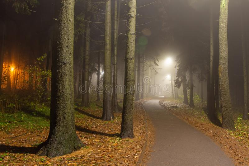 Forest park at night. Path in park with lanterns along alley. stock photos