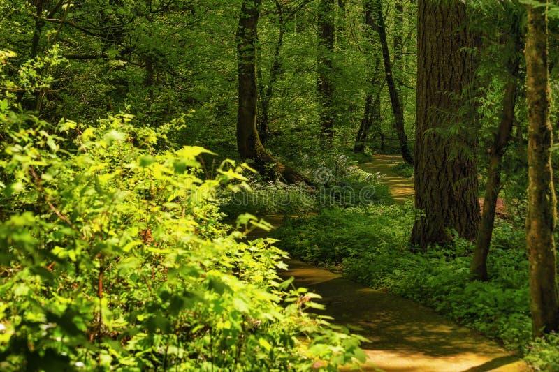 Forest Park slinga i Portland, Oregon royaltyfri bild