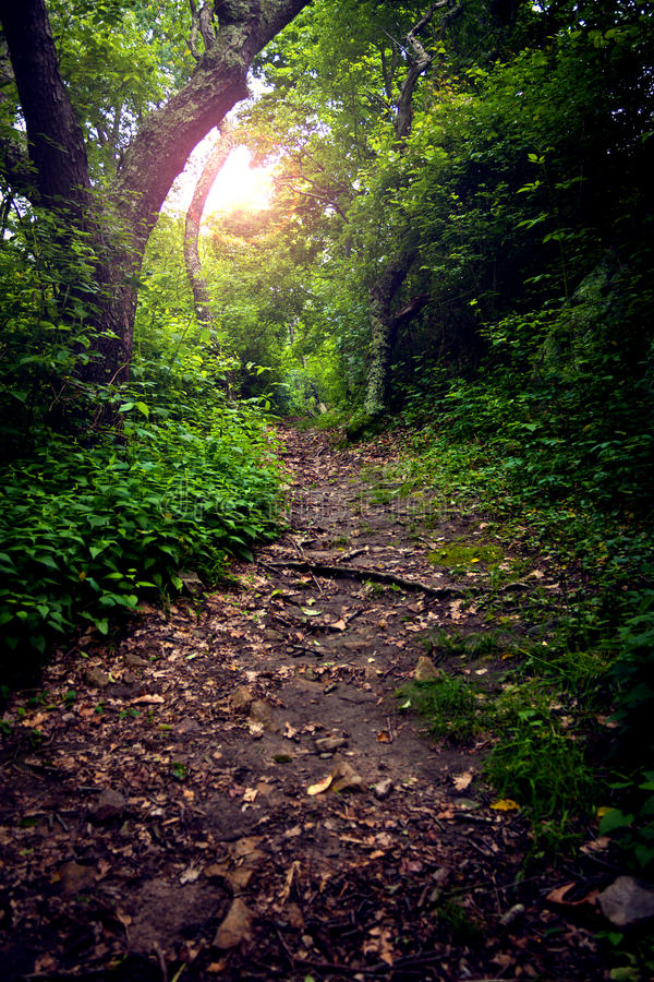 Free Forest Path Stock Photos - 15035763
