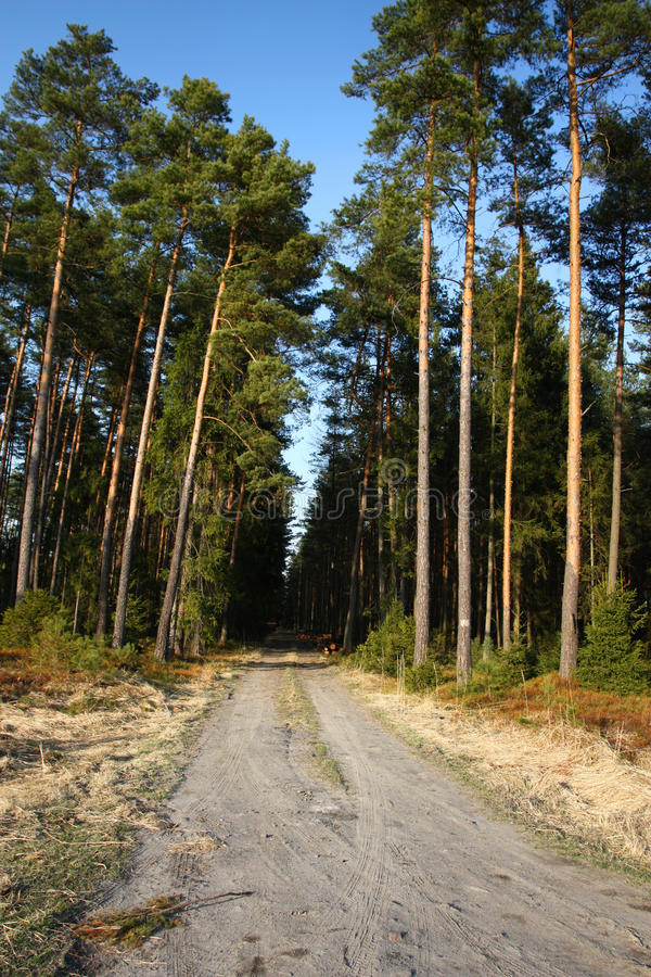 Download Forest path stock photo. Image of natural, countryside - 19155214