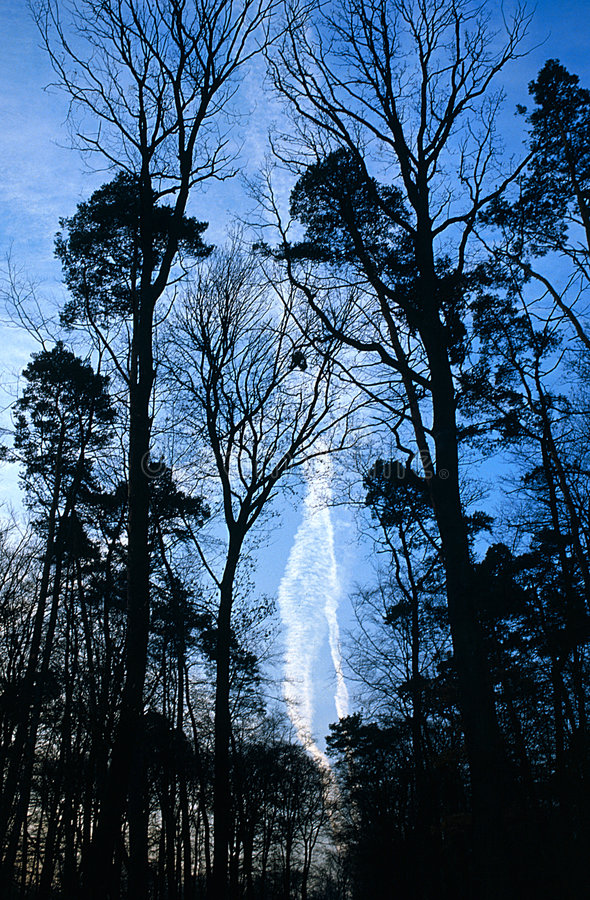 Download Forest Path stock image. Image of branch, contrail, vapor - 200483