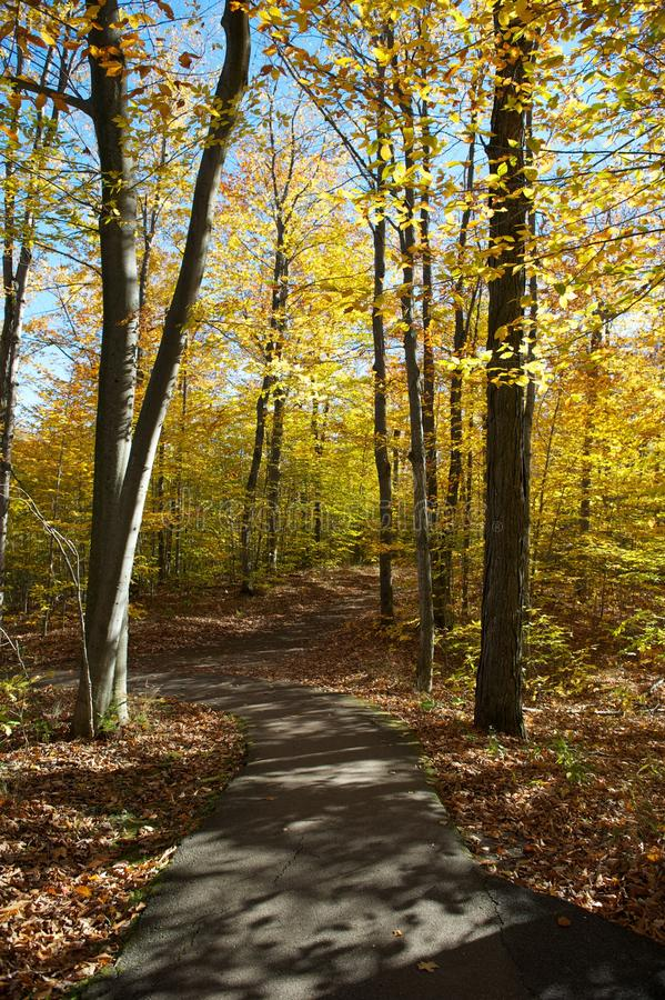 Pathway through autumn forest stock images