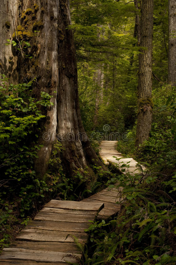 Download Forest Path stock image. Image of nature, pathway, journey - 25594909
