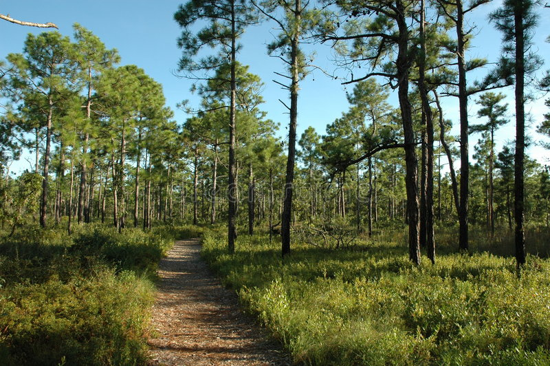 forest path royaltyfri fotografi