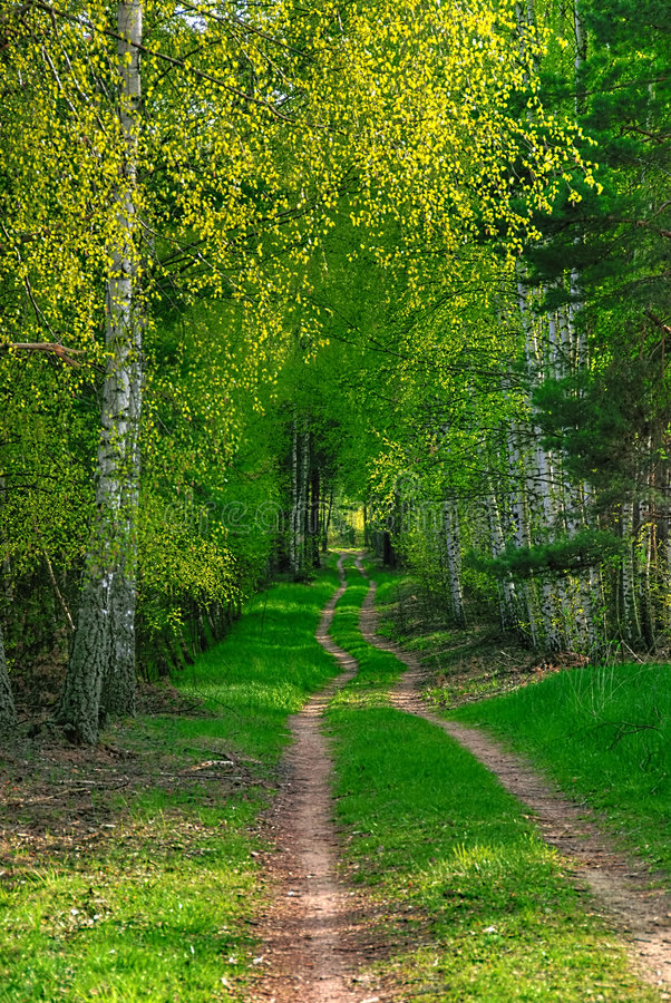 A forest path stock images