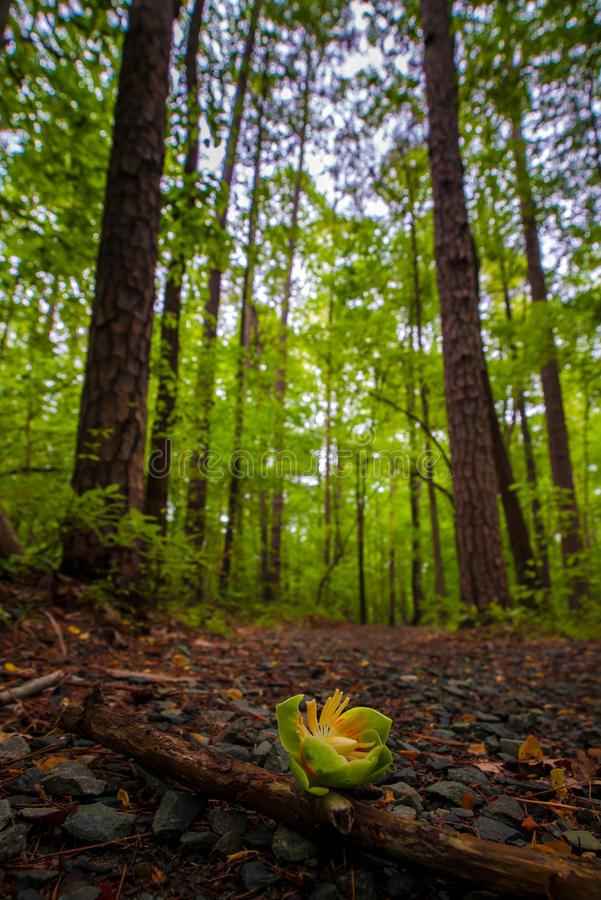 Forest Path 3 royalty-vrije stock afbeeldingen
