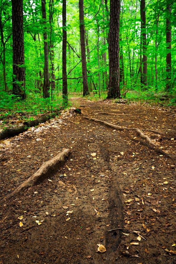 Forest Path 4 stock afbeeldingen