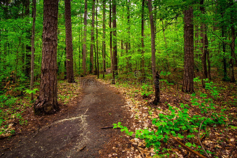 Forest Path 5 arkivfoton