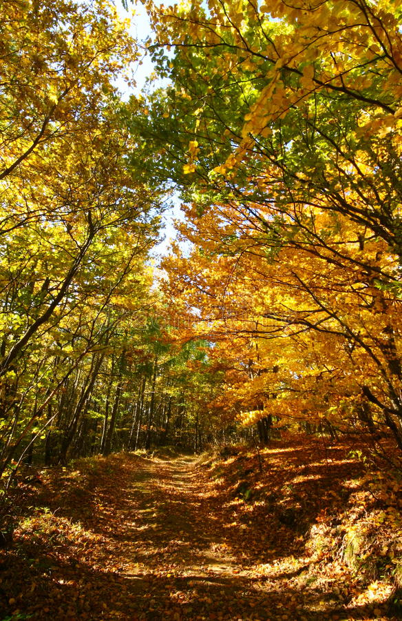 Forest Path In Autumn Royalty Free Stock Photo